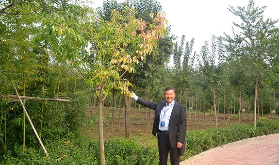 张允东:谈谈大叶丝棉木新品种的发展前景