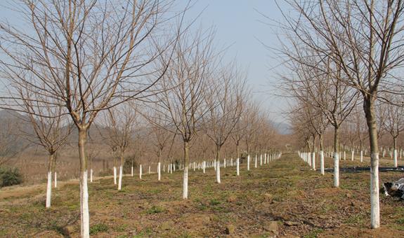 刘斯衷:苗圃投资与管理的终端置顶法则