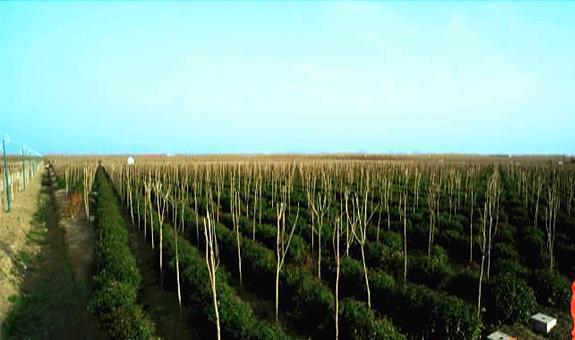 关于我国花木产业发展现状、问题与对策