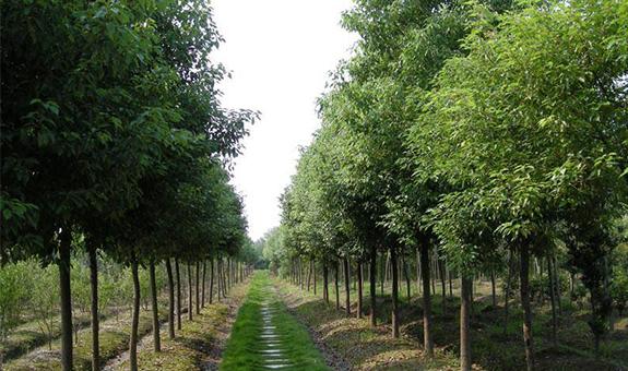 苗木产业需要怎么减肥?