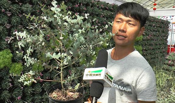 江苏鑫沃森农业,新品种面向的家庭园艺与地被市场