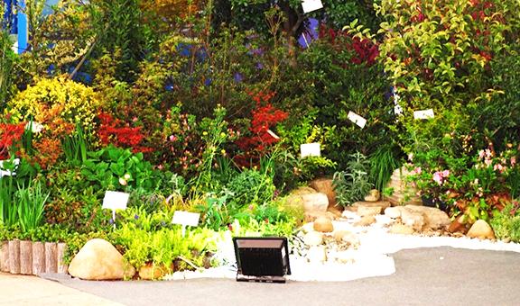 去年开始,花境植物根本来不及生产――访杭州画境种业有限公司副总经理赵斌