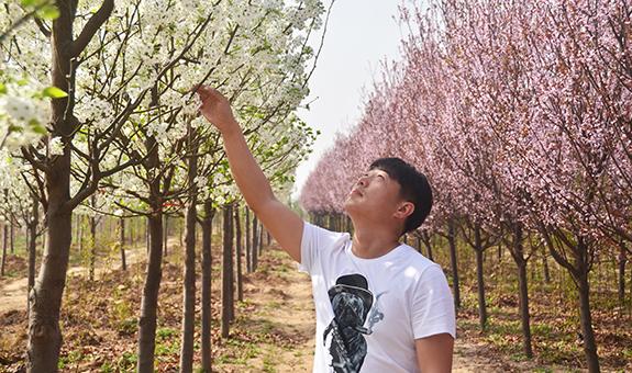 耿飞:彩叶豆梨点亮北方四季的色彩