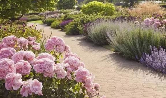 花境与心境 ――说说花境的本质特征与花境里的文化