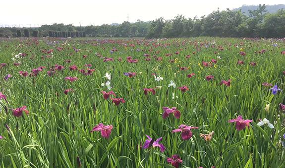 洪新夏:水生植物也要特色化转变