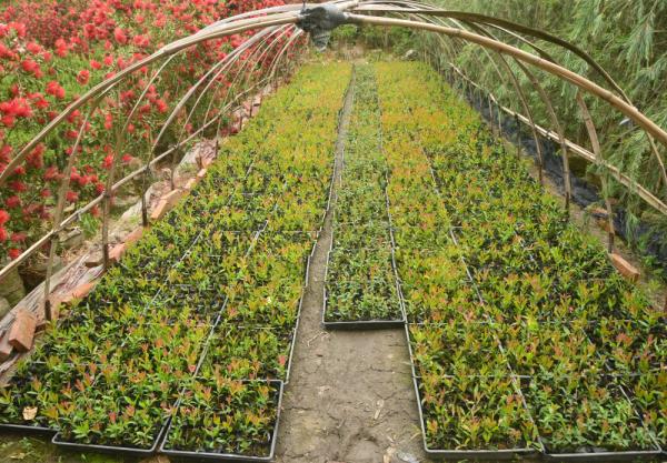 苗圃30亩,年利超百万,小苗不赚钱了?