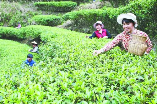 """龙胜20万公顷""""绿色银行""""助农增收"""