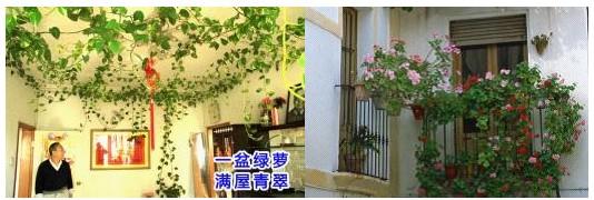 王仙民:立体绿化治理PM2.5