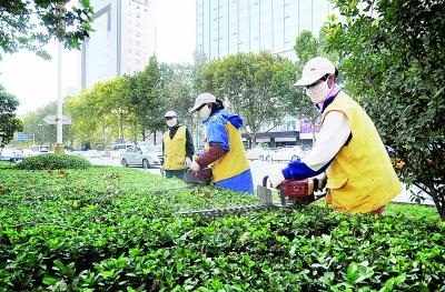 邯郸:园林工人在对人民路绿化景观