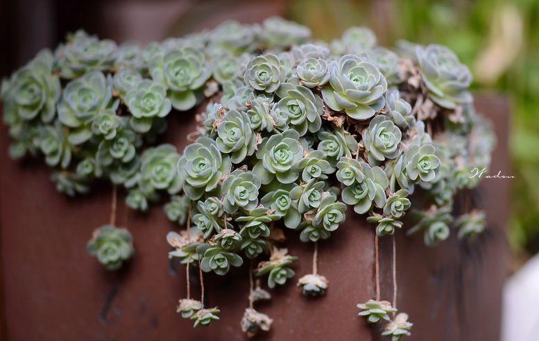 壁纸 花 花束 盆景 盆栽 鲜花 植物 777_491