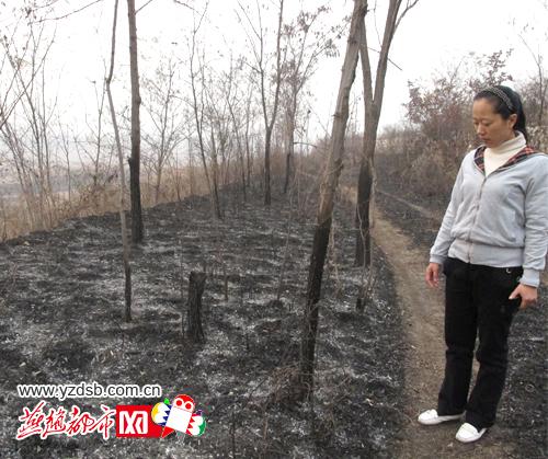 烧焦的森林矢量