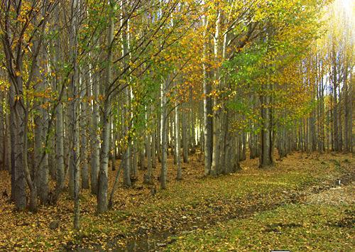 壁纸 风景 森林 桌面 500_355