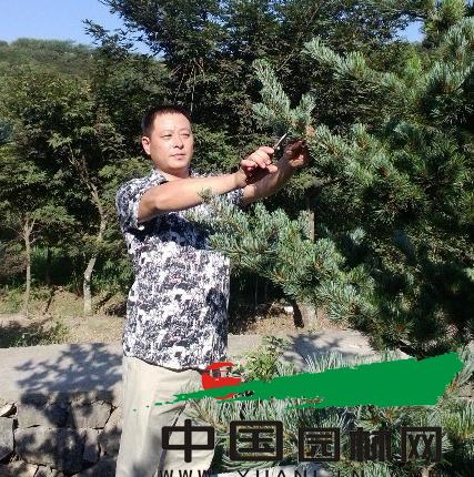 奉化溪口东东苗木场总经理滕燕东