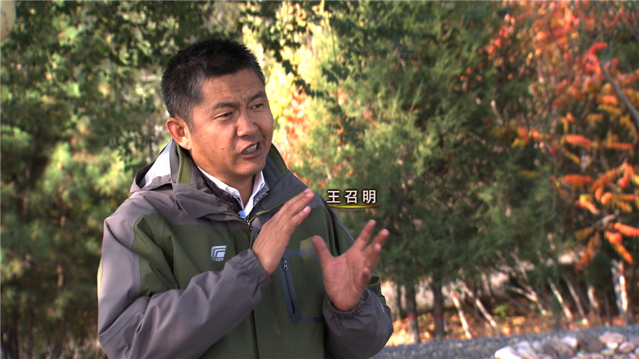 王召明:不值钱的草带来的巨额财富