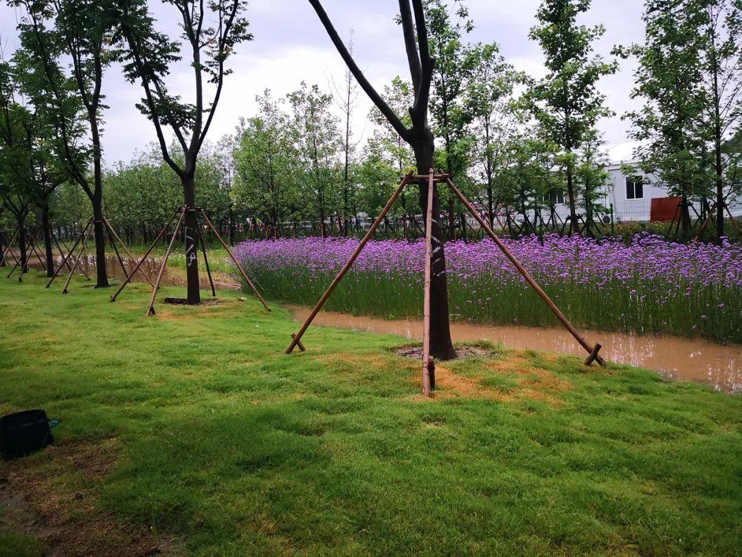 花博园区如何应对梅雨季