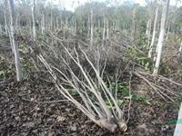 植物新品种维权,这家河南企业给出成功经验!