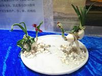 现场报道:精优水仙花雕刻作品添彩漳州花博会