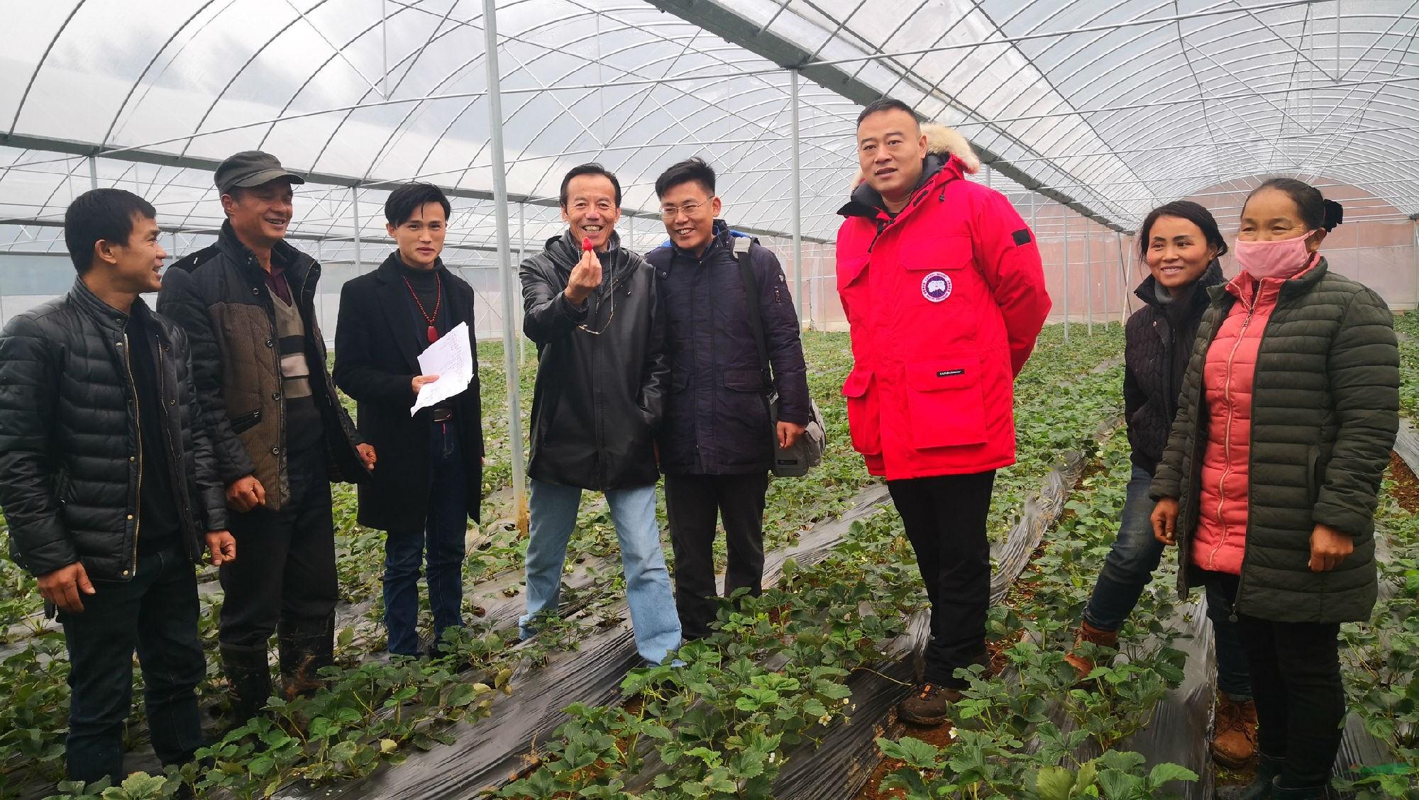 山东亚龙精准帮扶湖南花垣县长乐乡农民种植草莓致富