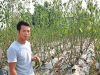 重庆老三梅花基地获重庆田园综合体产业联盟示范基地称号