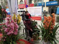 春节将至 昆明斗南迎来年宵花销售高峰