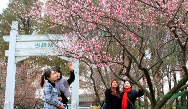 今日特稿:武汉东湖梅园入列国家梅花种质资源库榜单