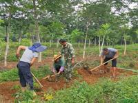 云南德宏:国家珍贵树种种质资源库藏宝纳珍