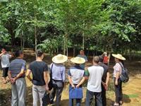 云南德宏:林草入列三年行动计划 苗木产业发展扬帆起航