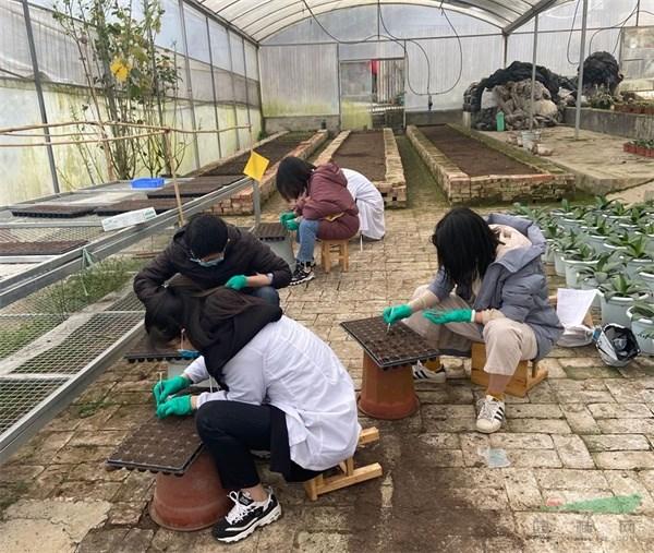 成都市植物园:芙蓉花研发成果为美丽蓉城添彩