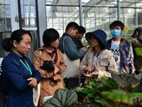 行业盛会 大咖云集 首届秋海棠学术研讨会在沪成功举办