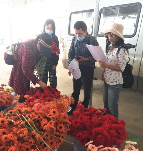 滇沪检验测试中心合作开展云南非洲菊鲜切花产品质量抽检