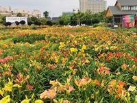 我国萱草新品种选育成果丰硕 去年21个新品种获国际登录
