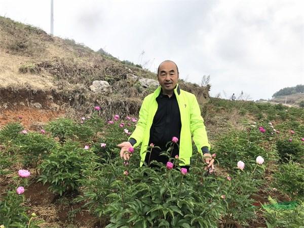 云南花企种植百亩滇牡丹 为抢救性保护濒临灭绝物种发力