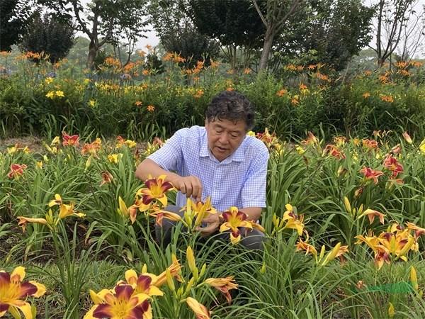 上海应用技术大学:萱草创新研发成果丰硕 助力产业健康持续发展