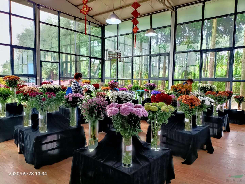 就在刚才,昆明嵩明县第五届花卉博览会开幕