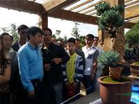 第四届宣威市盆景展览会即将举办