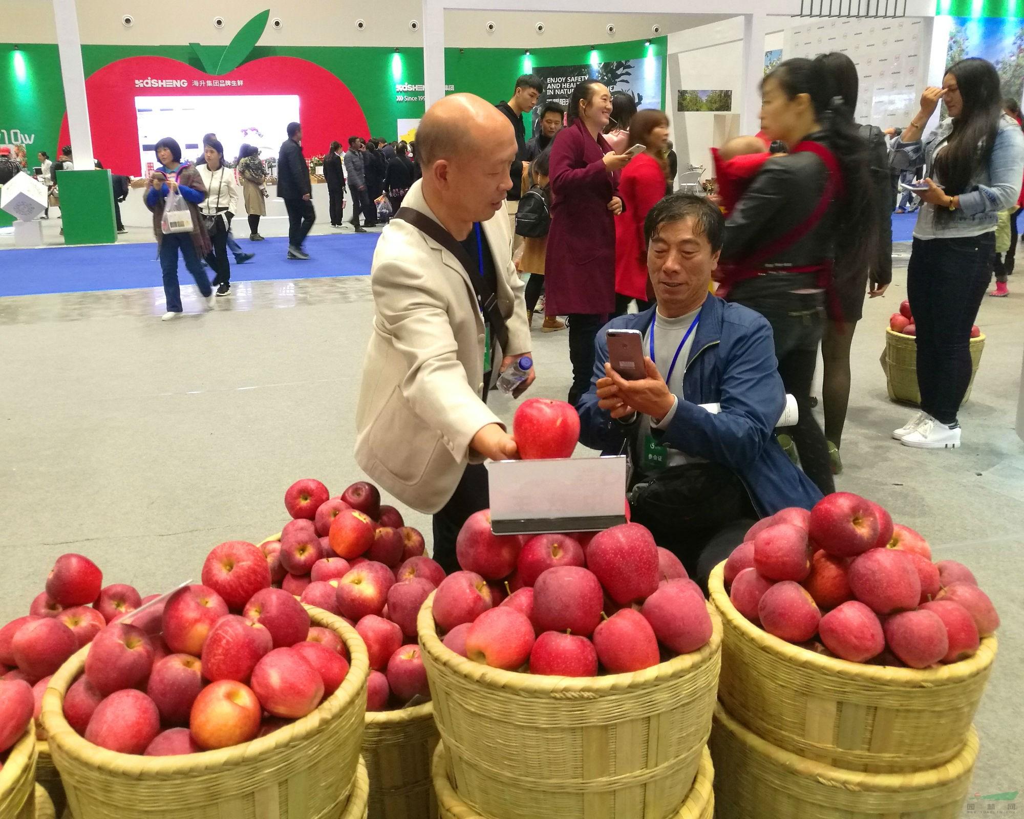 云南昭通市将办苹果节 全力打造苹果之城品牌