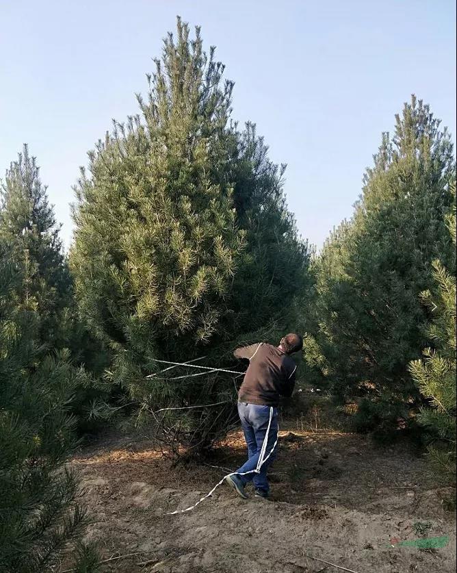 韩冬冬:打破果树种植的困局,需要从精品苗入手