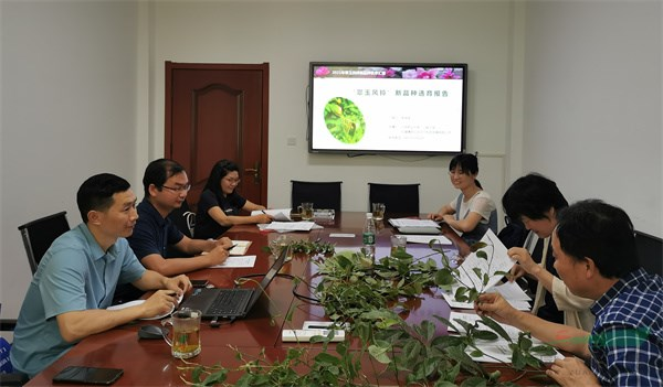 国内首个木兰科叶型变异新品种通过专家实审