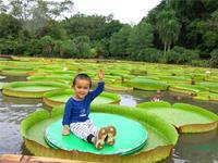 版纳植物园能载人的王莲叶径达1.92米,创历史之最