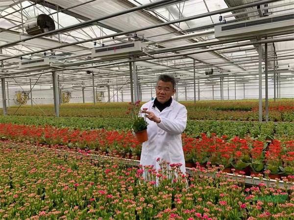 回顾上海花卉波澜壮阔的光辉历程  展望中国花卉产业未来的光明前景