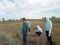 半路杀出程咬金 前景广阔的新疆观赏草面临危机