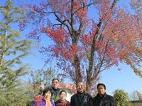 云南发现中国最美樱花 实现著名植物学家蔡希陶36年前嘱托