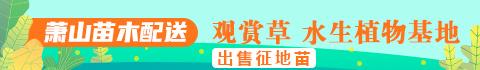 杭州萧山铭杰园艺场1.jpg