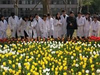 专家呼吁:郁金香种球国产化势在必行