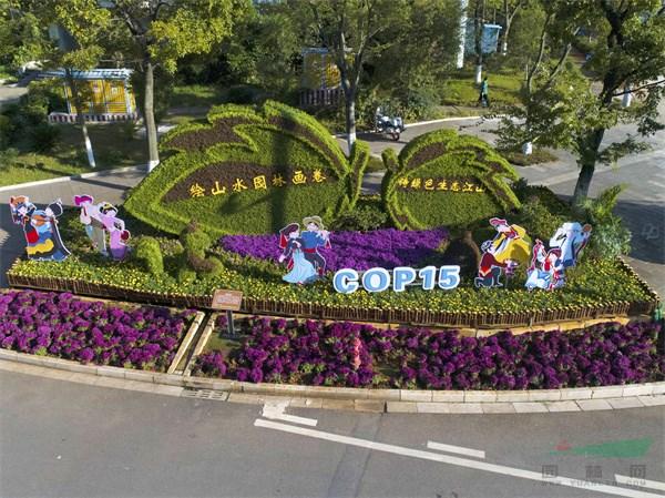 喜迎COP15盛会在昆明召开 百组精美立体花坛扮靓春城