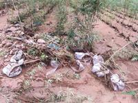 洪灾无情 同心渡难 天水五小叶植物保护研究所向社会紧急求援