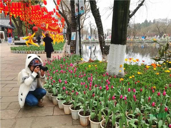 云岭大地花开成海 花团锦簇喜迎新春