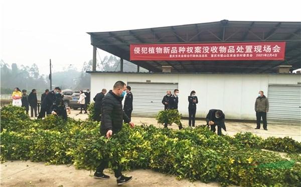 重庆首例植物新品种侵权案公开处置侵权种苗