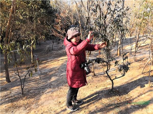 《北京常绿阔叶植物》出版 为首都绿化建设提供支撑