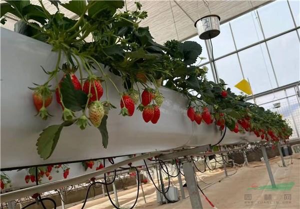 云南昆明投资约18亿打造国家高原云果产业园